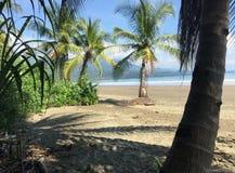 Spiaggia della coda della balena Immagine Stock Libera da Diritti