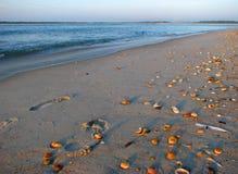 Spiaggia della conchiglia fotografie stock libere da diritti
