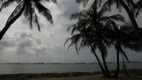 Spiaggia della costa Est di Singapore con la palma ed i cocchi che ondeggiano nel vento e lasso di tempo commovente delle nuvole 1 video d archivio
