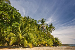 Spiaggia della foresta pluviale Fotografia Stock Libera da Diritti