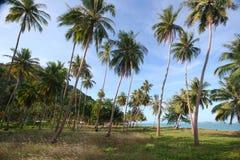 Spiaggia della noce di cocco. Fotografia Stock