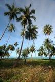 Spiaggia della noce di cocco Fotografia Stock