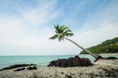 Spiaggia della noce di cocco sulla sabbia tropicale Fotografie Stock