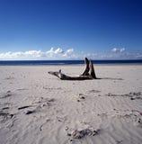 Spiaggia della Nuova Zelanda Immagini Stock Libere da Diritti