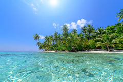 Spiaggia della palma Immagini Stock Libere da Diritti