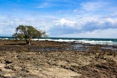 Spiaggia della roccia fotografie stock libere da diritti