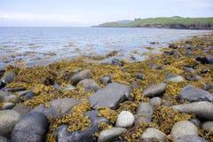 Spiaggia della roccia Fotografia Stock Libera da Diritti