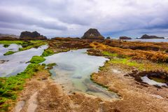 Spiaggia della roccia della guarnizione sulla costa dell'Oregon Fotografia Stock