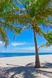 Spiaggia della sabbia con le palme Immagini Stock Libere da Diritti