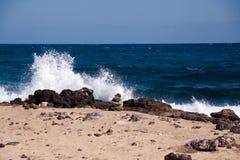 Spiaggia della sabbia in estate Immagini Stock Libere da Diritti