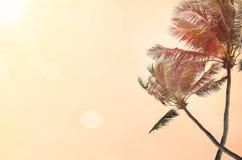 Spiaggia della sfuocatura con il fondo dell'estratto della palma Immagini Stock Libere da Diritti