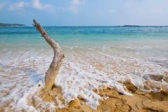 Spiaggia della Sri Lanka Immagini Stock Libere da Diritti