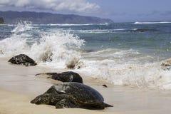 Spiaggia della tartaruga Fotografia Stock Libera da Diritti
