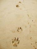 Spiaggia della zampa fotografie stock