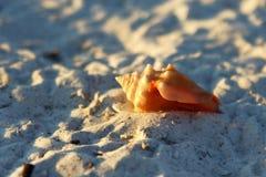 Spiaggia delle coperture Immagine Stock