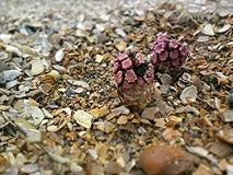 Spiaggia delle piante fotografie stock