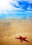 Spiaggia delle stelle marine Fotografie Stock