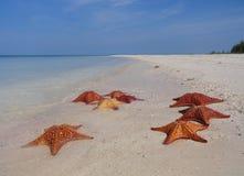 Spiaggia delle stelle marine Fotografia Stock