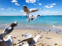 Spiaggia di amore fotografia stock