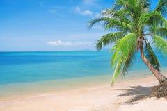 Spiaggia di Beaautiful con la palma ed il mare di noce di cocco Immagine Stock Libera da Diritti