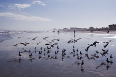 Spiaggia di Cocao in Florida Fotografie Stock