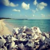 Spiaggia di Coral Reef dell'isola di Cozumel fotografia stock libera da diritti