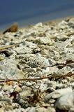 Spiaggia di corallo fotografia stock libera da diritti