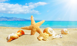 Spiaggia di estate con le stelle marine e le coperture Fotografia Stock