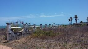 Spiaggia di estate dell'albero della natura degli azzurri Fotografia Stock