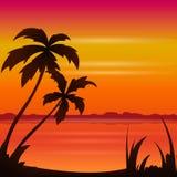 Spiaggia di estate dell'oceano di tramonto con la palma tropicale sopra l'orizzonte Immagine Stock