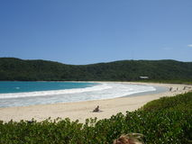 Spiaggia di flamenco, i Caraibi, Porto Rico Fotografia Stock