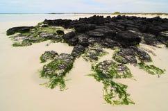 Spiaggia di Galapagos Fotografie Stock Libere da Diritti