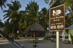 Spiaggia di incastramento della tartaruga a Belize Immagini Stock
