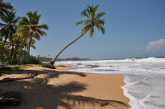Spiaggia di Kosgoda, Sri Lanka Fotografie Stock