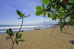Spiaggia di Kuta dietro le foglie verdi Fotografie Stock Libere da Diritti
