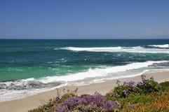 Spiaggia di La Jolla Immagine Stock