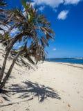 Spiaggia di Lamu, Kenya Immagine Stock