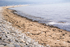 Spiaggia di Mar Nero coperta di alghe marcie Costa di Mar Nero, Novorossijsk, Russia Fotografia Stock Libera da Diritti