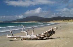 Spiaggia di Mason Bay fotografia stock libera da diritti