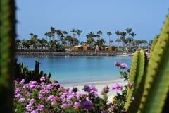 Spiaggia di Mst del fel di Anfi, isola di Gran Canaria, Spagna Fotografia Stock