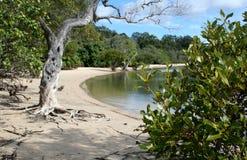 Spiaggia di Murwong Fotografia Stock Libera da Diritti