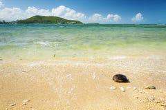 Spiaggia di Noumea Nuova Caledonia immagine stock libera da diritti