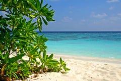 Spiaggia di Oceano Indiano Fotografia Stock Libera da Diritti