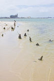 Spiaggia di Oporto de Galinhas Fotografia Stock Libera da Diritti