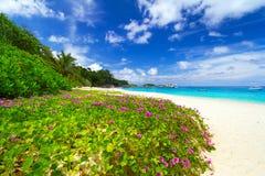 Spiaggia di paradiso delle isole di Similan Fotografia Stock Libera da Diritti