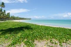 Spiaggia di Patacho, Brasile Fotografia Stock