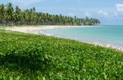 Spiaggia di Patacho, Brasile Immagine Stock