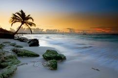 Spiaggia di Punta Cana, Repubblica dominicana Fotografia Stock