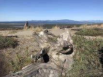 Spiaggia di Rathtrevor, Parksville, BC Immagini Stock Libere da Diritti