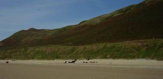 Spiaggia di Rhossilli nella regione di Gower di Galles del sud Immagini Stock